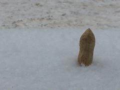20130129 - Sometimes you feel like a nut