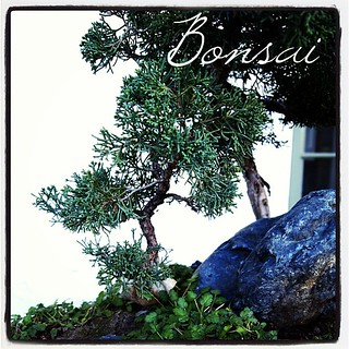 Garden Alphabet: Bonsai