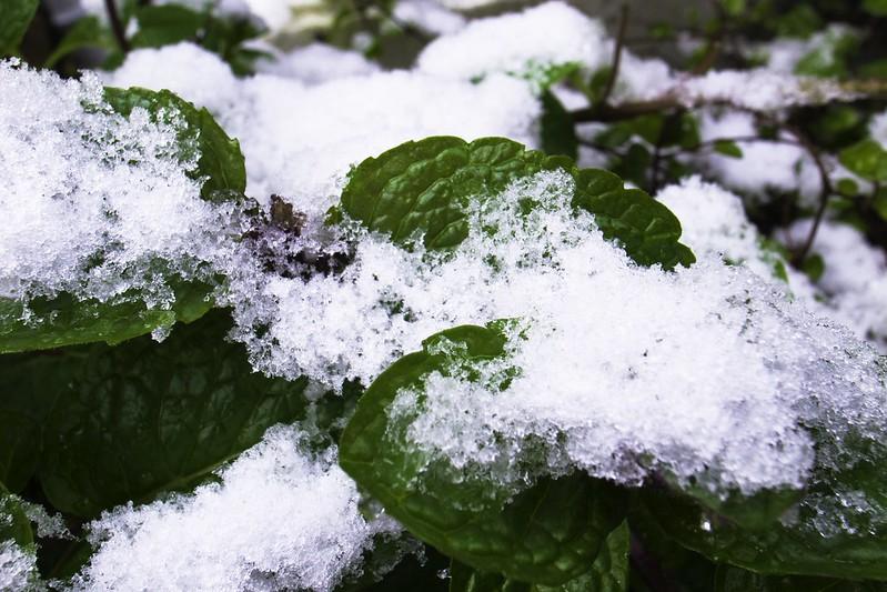 雪積もる-1
