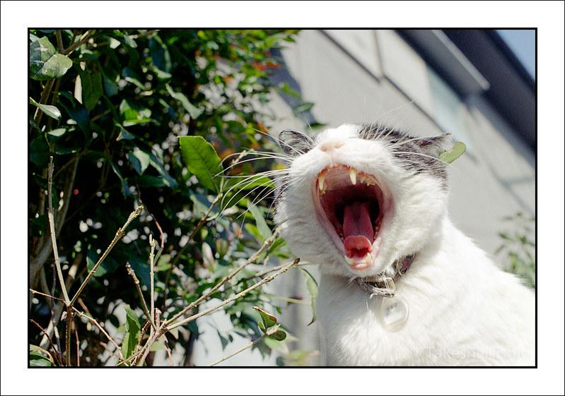 あくび / Yawn