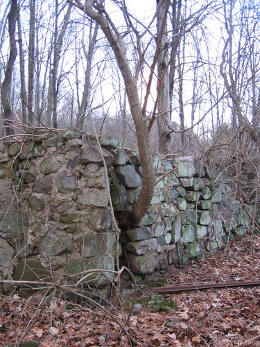 Connecticut stone wall with tree by Coyoty