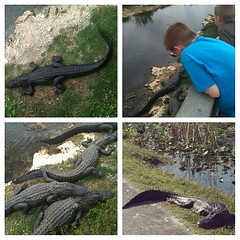 W is for wildlife studies #Homeschool #hswildlife