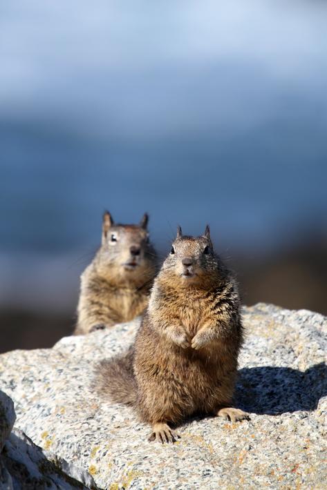 012513_03_Squirrel