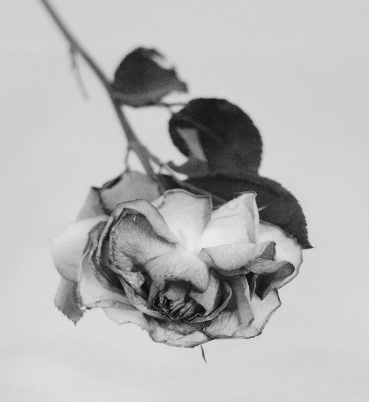 A rose is still a rose ..in mono.