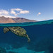 above and below west maui by bluewavechris