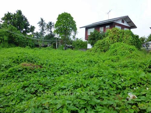 Green Bangkok