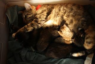 Maisy family