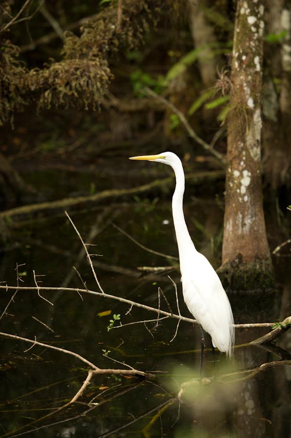 RYALE_Everglades-115
