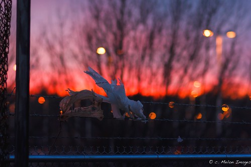 city trees light sunset shadow sky urban favorite sun color beautiful silhouette clouds train canon bag march spring wire dof dragon wind bokeh dusk vibrant rich 85mm fave trainstation pastels barbedwire barbed pinebarrens hff markiii 2013 whitesbog canon85mm 5dmarkiii
