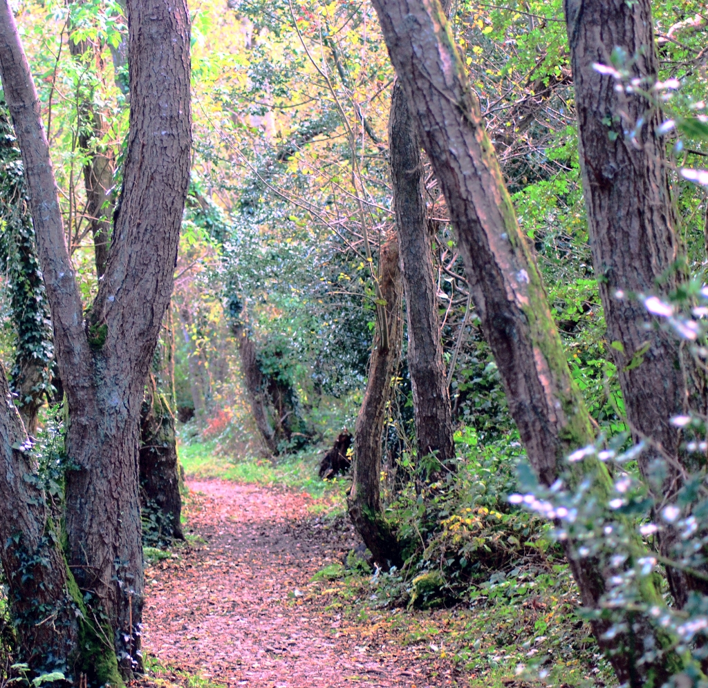 Wood Mountain Elevation : Elevation of shillelagh manor ballard co