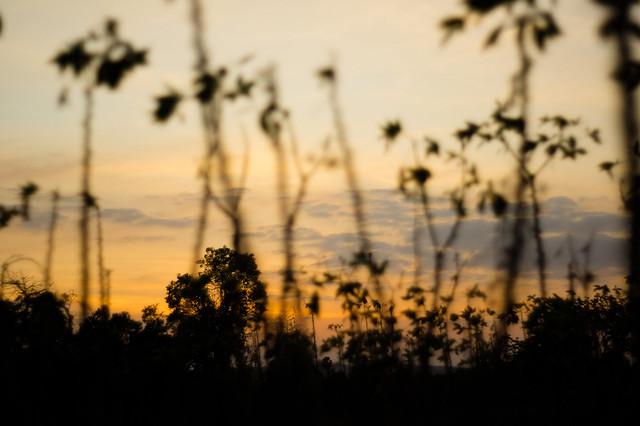 Rural Sky Panglakor