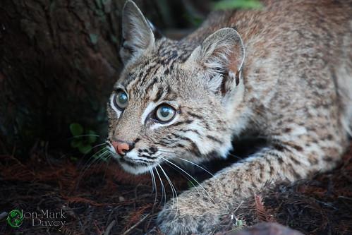 Kitten in the Cay