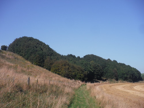 Hanging Copse in Grove Hill Bottom