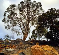 So Aussie :) #michfrost #landscape
