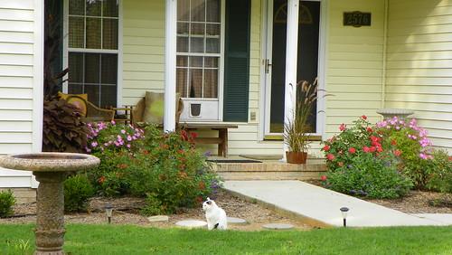 Cat Door, Garden & Birdbath