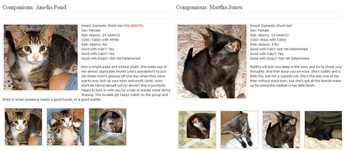 Companion Kittens adoption profiles