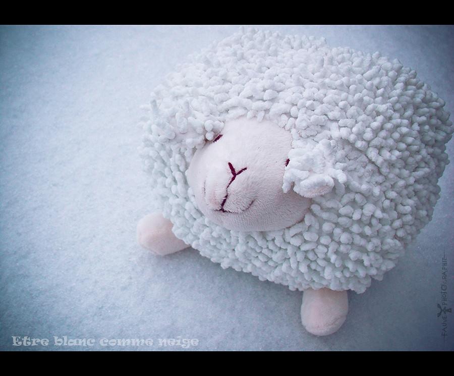 [PHOTO] Etre blanc comme neige