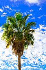 Palm Tree - Tenerife - Canary Islands - Holiday. By Thomas Tolkien