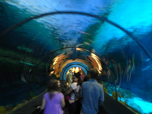 tunnel of sharks