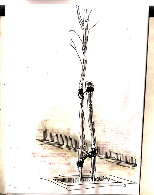 arbolillo madrileño