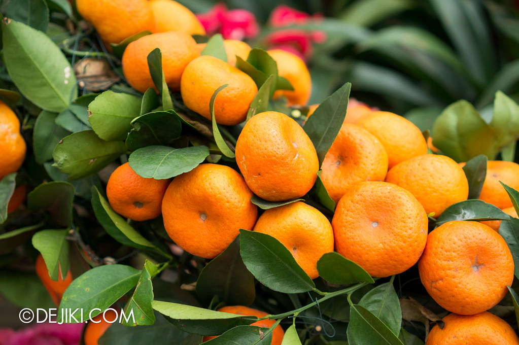 Gardens by the Bay - Mandarins
