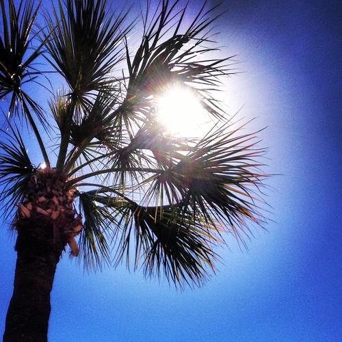 Florida (36/365) by elawgrrl