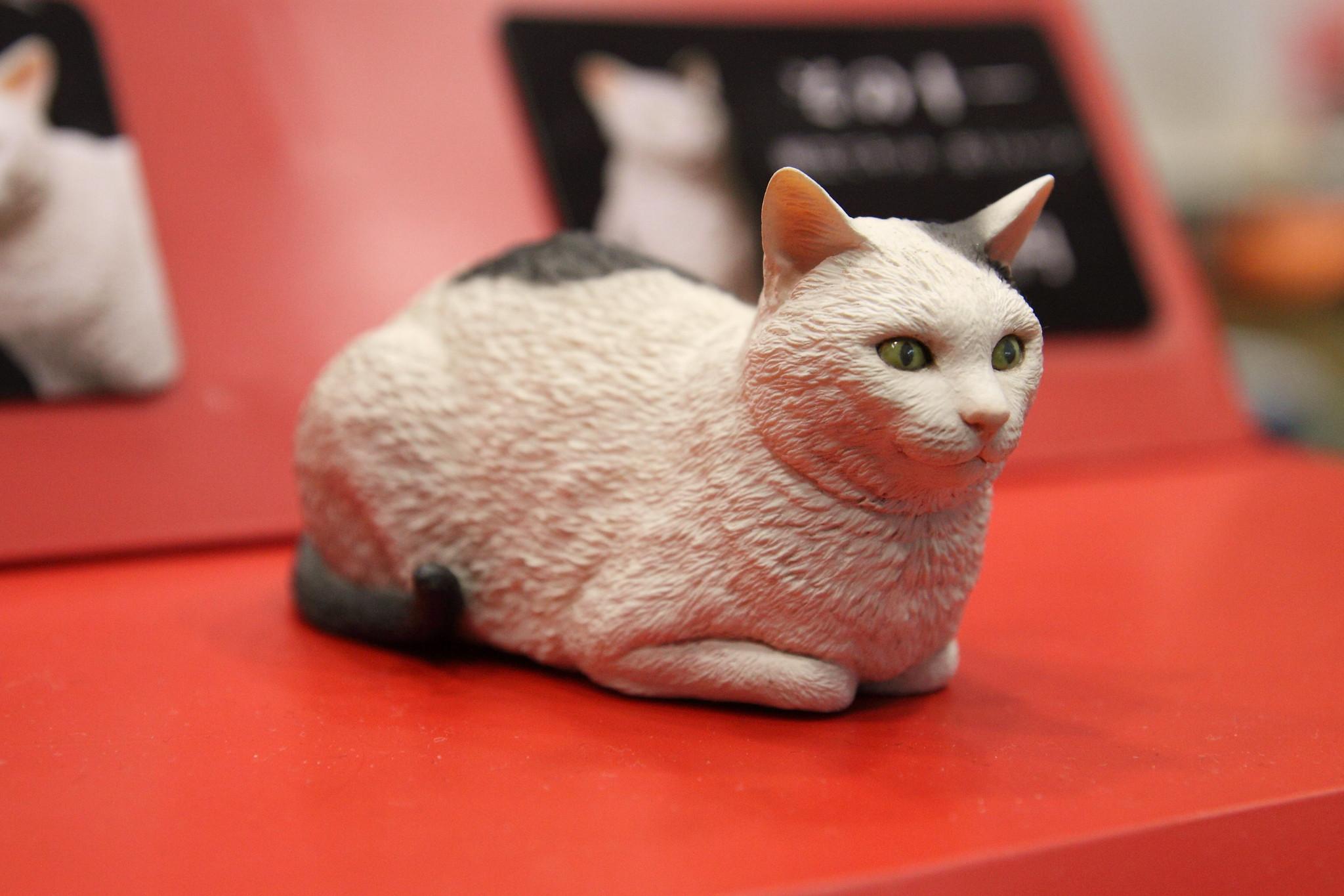 森口修の猫02