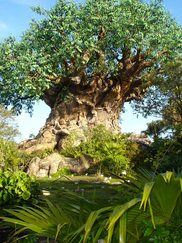 disney world animal kingdom