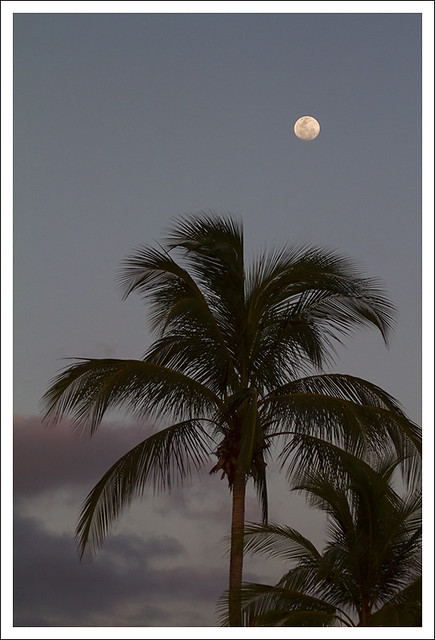 Last Night - Moonrise 2
