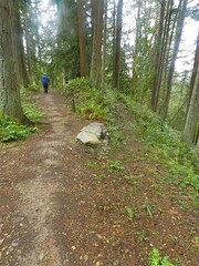 Descending Big Tree Ridge