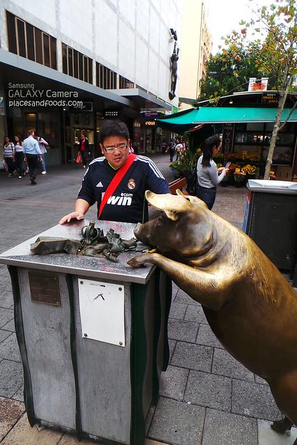 bronze pig rubbish bin adelaide