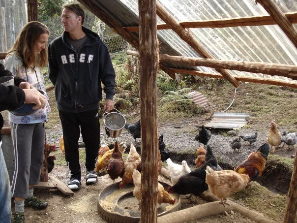Healthy Chickens on Seelye Family Farm