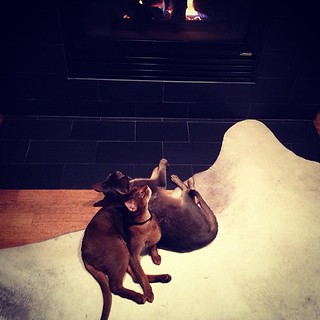 The boys always enjoy a good fire.