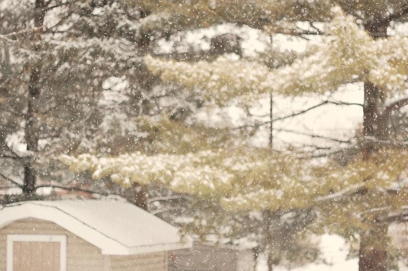 DSC_0163-snow