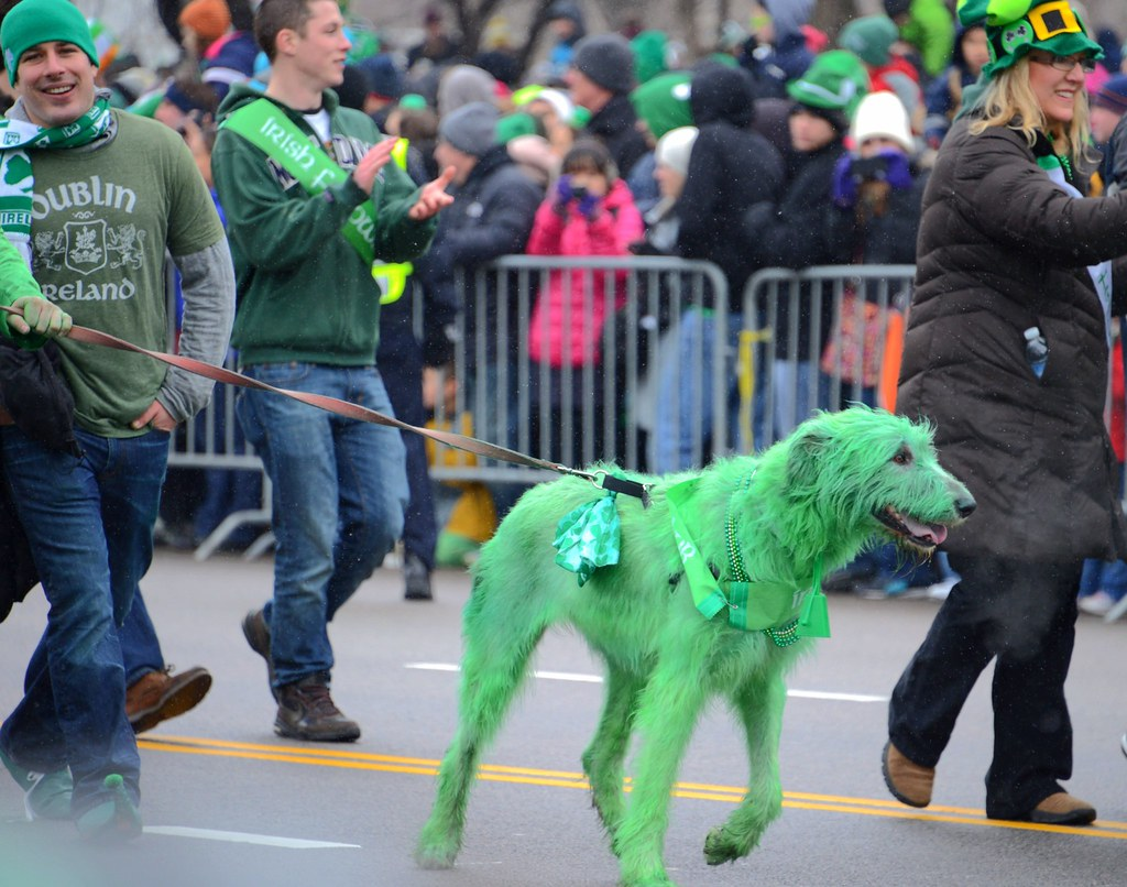 Dog at St Patrick's Day Parade, Chicago, Illinois