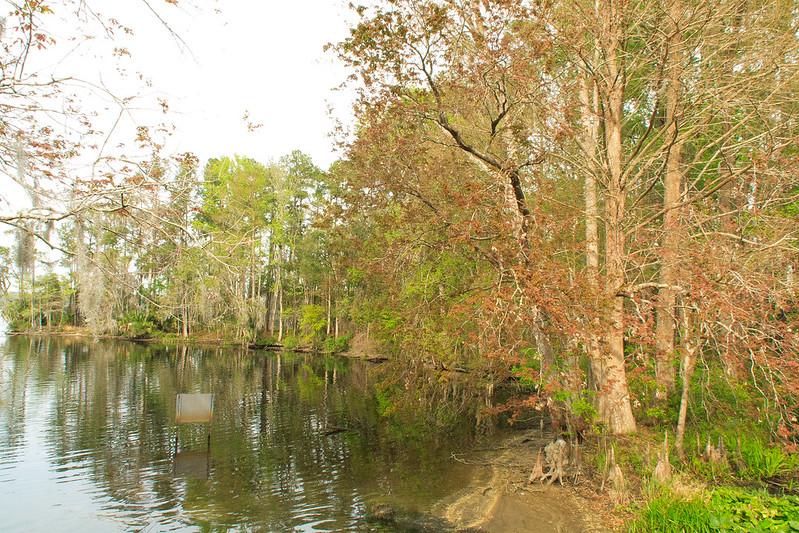 Julington Creek at Westminister Woods near St. Augustine, Florida