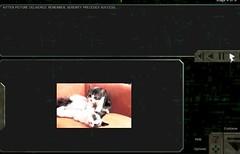 FS2-BP Katzen 2