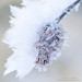 hoar-frost-detail-3