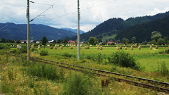 Romanian Summer Fields