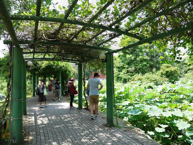 台北一日遊景點推薦植物園荷花蓮花池 (9)