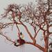 Jabiru by Greg Lavaty Photography