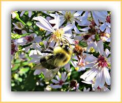 Bee On Wildflowers