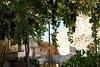 Kreta 2007-2 135