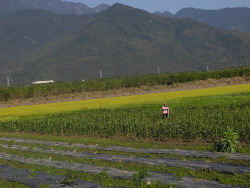 富興LiPaHak生態農場