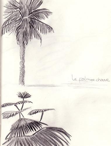 le palmier chauve RS