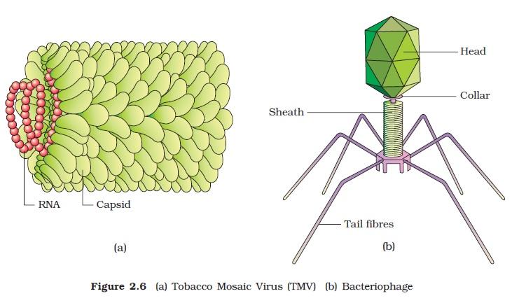 NCERT Class XI Biology: Chapter 2 - Biological ...