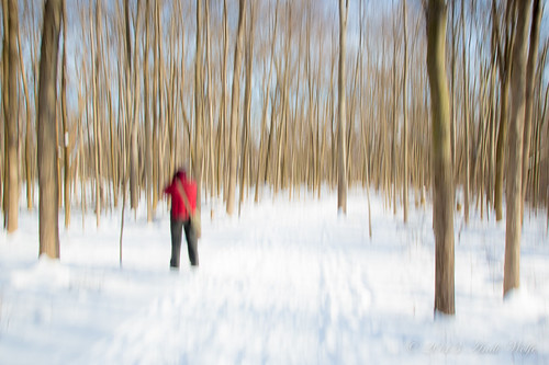 ICM. In the woods on a snowy day by andiwolfe