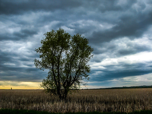 storm tree nature field clouds landscape wyoming