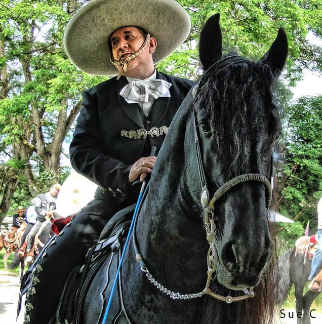 Black Horse Parade