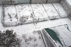the first inch of snow 065